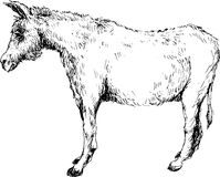 Hand drawn donkey Royalty Free Stock Photos
