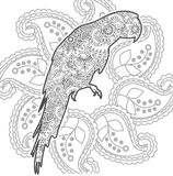Parrot hand drawn doodle animal paisley adult stress release coloring page zentangle. Hand drawn doodle animal paisley adult stress release coloring page Royalty Free Stock Photo