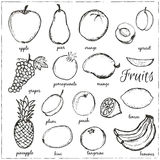 Hand drawn doodle Fruits with name. Stock Images