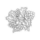 Hand drawn doodle outline grape fruit magic line art element with floral ornament. Stock Photo