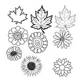 Hand drawn doodles of flower and leaf Stock Photography