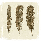 Hand drawn dotted feathers in vintage style Stock Photography