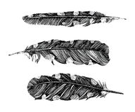 Hand drawn dotted feathers on white background Royalty Free Stock Photography
