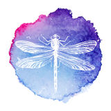 Hand Drawn Dragonfly On Watercolor Background Stock Image
