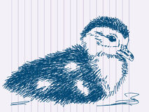 Hand drawn duckling Stock Image