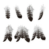 Hand drawn eagle feathers set Royalty Free Stock Photos
