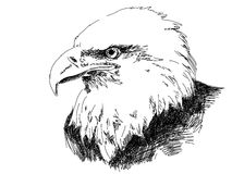 Hand drawn eagle. Head vector Stock Images
