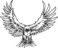 Hand drawn eagle Royalty Free Stock Images