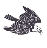 Hand drawn eagle. Stock Photo