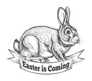 Hand Drawn Easter Bunny Royalty Free Stock Photography