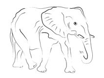 Hand drawn Elefant Illustration Stock Photography