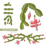 Hand drawn Elements of Christmas cactus and brushes. Vector illustration. stock illustration