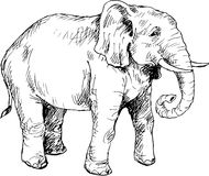 Hand drawn elephant Royalty Free Stock Photography