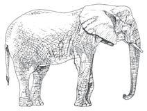 Hand drawn elephant. Stock Images