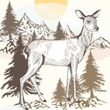 Hand drawn engraved deer  illustration Royalty Free Stock Photography
