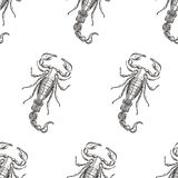 Hand drawn engraving Scorpion seamless pattern. Vector illustrat Royalty Free Stock Images