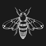 Hand drawn engraving Sketch of  Bee. Vector illustration for tat Stock Images