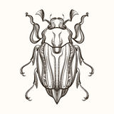 Hand drawn engraving Sketch of  Beetle, May bug. Vector illustra Stock Photo