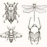 Hand drawn engraving Sketch of Scarab Beetle, May bug, Bee and D Royalty Free Stock Images