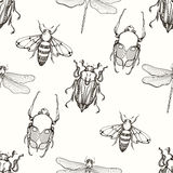 Hand drawn engraving Sketch of Scarab Beetle, May bug, Bee and D Royalty Free Stock Photography