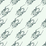 Hand drawn engraving Sketch of Scarab Beetle, May bug or Europea Stock Photo