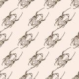 Hand drawn engraving Sketch of Scarab Beetle, May bug or Europea Stock Photos
