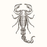Hand drawn engraving Sketch of Scorpion. Vector illustration for Stock Photo