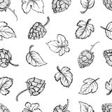 Hand drawn engraving style Hops Seamless pattern. Stock Photos