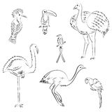 Hand Drawn Exotic Tropical Birds. Doodle Drawings of Parrot, Ostrich, Emu, Hummingbird, Hoopoe and Toucan. Sketch Style. Vector Illustration Stock Image