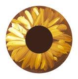 Hand drawn eye iris. painted shabby concept eyes Royalty Free Stock Photo
