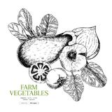 Hand drawn farm vegetables. Eggplant,garlic, onion, tomato, spinach. Vector engraved illustration. Farmers market plants. Good for restaurant, menu, food shop Royalty Free Stock Image