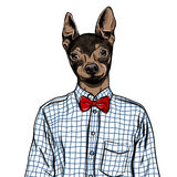 Hand Drawn Fashion Illustration of dressed up english Toy Terrier, in colors. Vector Royalty Free Stock Images