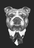 Hand drawn fashion Illustration of English Bulldog. Royalty Free Stock Photography