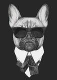 Hand drawn fashion Illustration of French Bulldog. Stock Photos