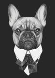 Hand drawn fashion Illustration of French Bulldog. Vector isolated elements Royalty Free Stock Image