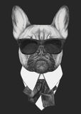 Hand drawn fashion Illustration of French Bulldog. Stock Photography