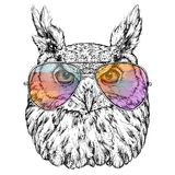Hand Drawn Fashion Illustration of Hipster Owl with aviator sunglasses. Vector illustration Royalty Free Stock Photography