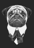 Hand drawn fashion Illustration of Pug Dog. Vector  elements Stock Images