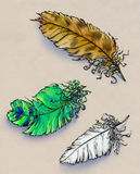 Hand drawn feathers of eagle, pigeon and peacock royalty free illustration