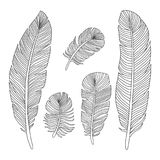 Hand drawn feathers outline silhouettes. Isolated on white background. Vector illustration Royalty Free Stock Photo