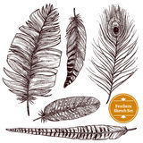 Hand Drawn Feathers Set. Of different bird plumes on white background isolated vector illustration Stock Images