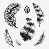 Hand drawn feathers set. Hand sketched vector illustration, on white stock illustration