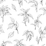 Hand Drawn Ficus Branch Pattern Stock Photography