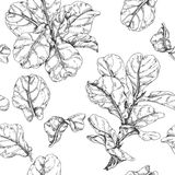 Hand Drawn Ficus Branch Pattern Stock Image
