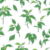 Hand Drawn Ficus Branch Pattern Royalty Free Stock Image