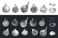 Hand drawn fig icons set isolated on white and black chalk background. Sketch of fruits for packaging and menu design. Vintage royalty free illustration