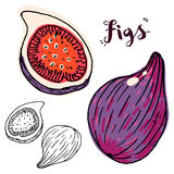 Hand drawn figs Royalty Free Stock Photos