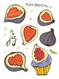 Hand drawn figs Royalty Free Stock Photo