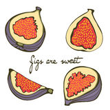 Hand drawn figs colorful set Royalty Free Stock Image