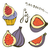 Hand drawn figs and fig cupcake Royalty Free Stock Photography